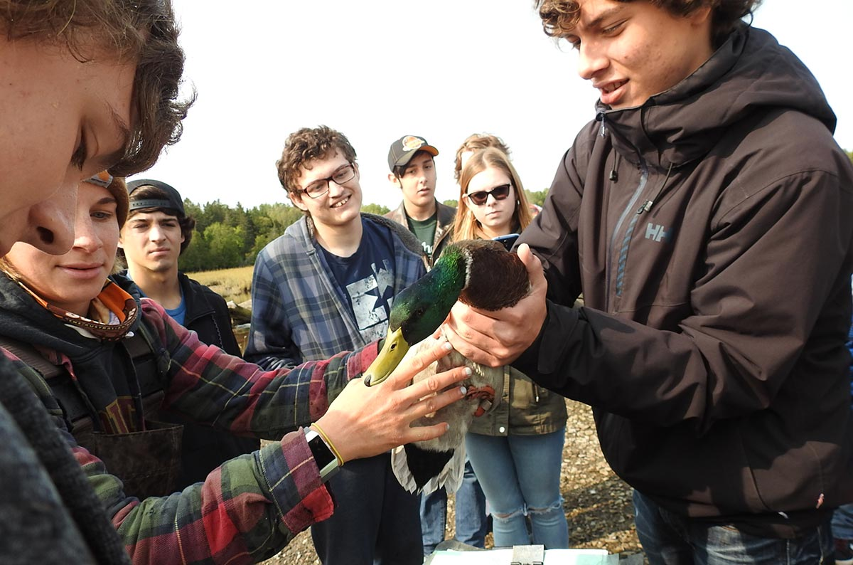 Students banding ducks