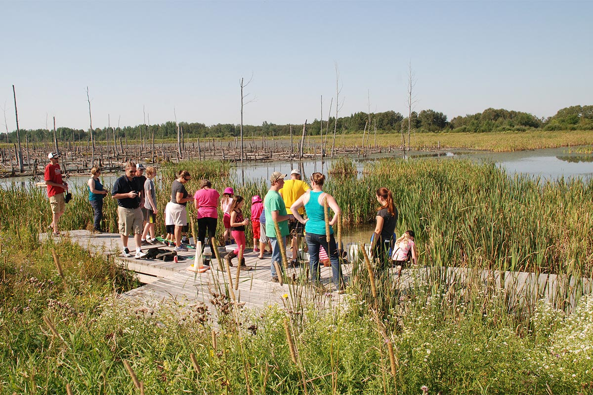 Students on a wetland tour