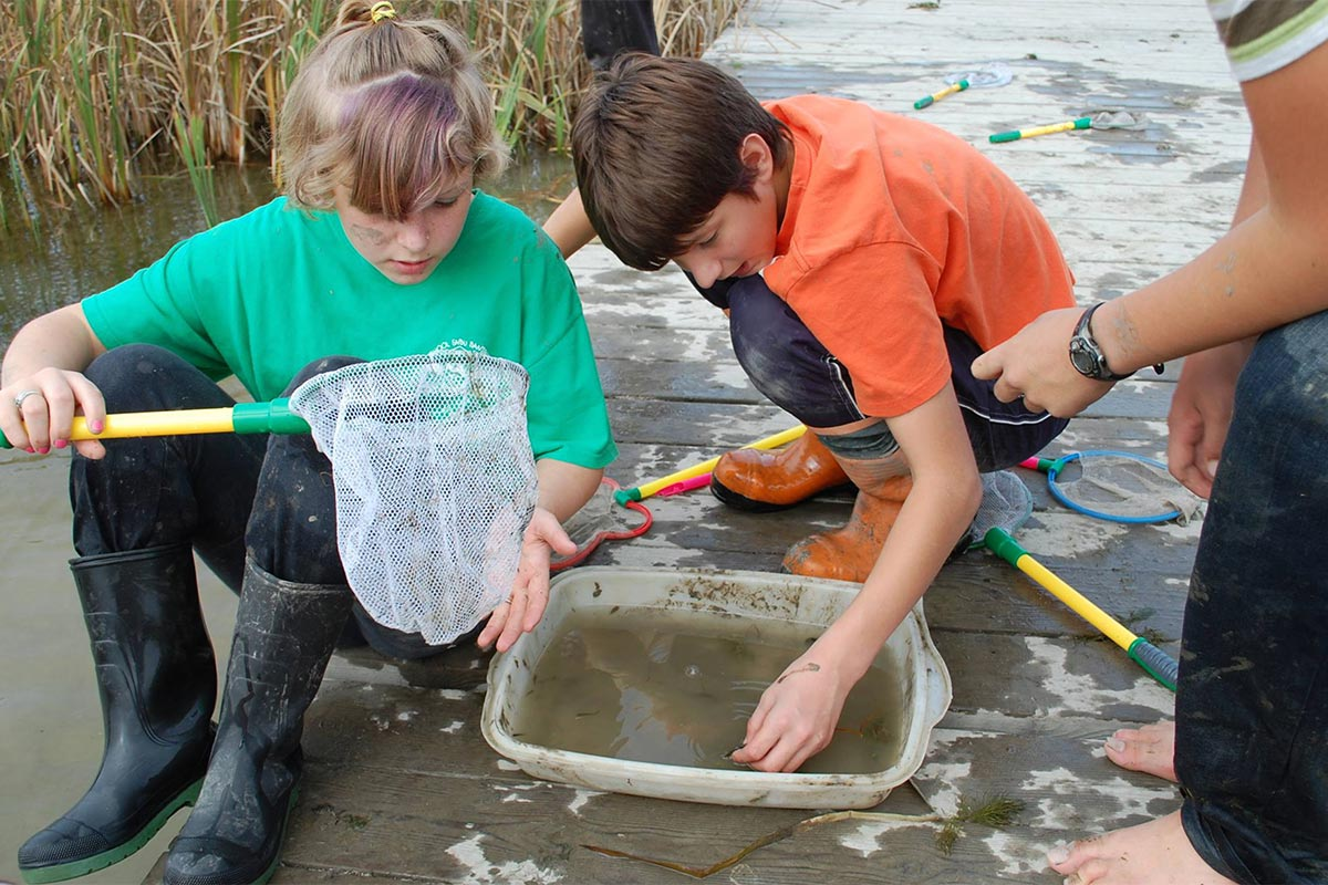 Students critter dipping